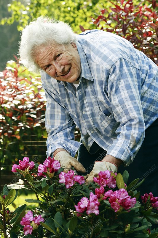 Elderly lady gardening