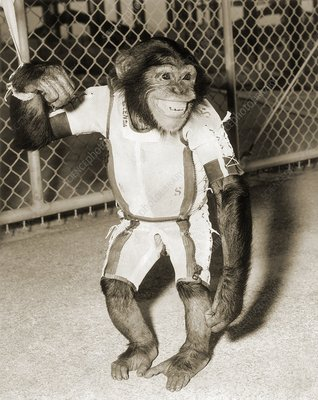 First chimpanzee in space