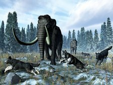 Dire wolves and mammoths, artwork