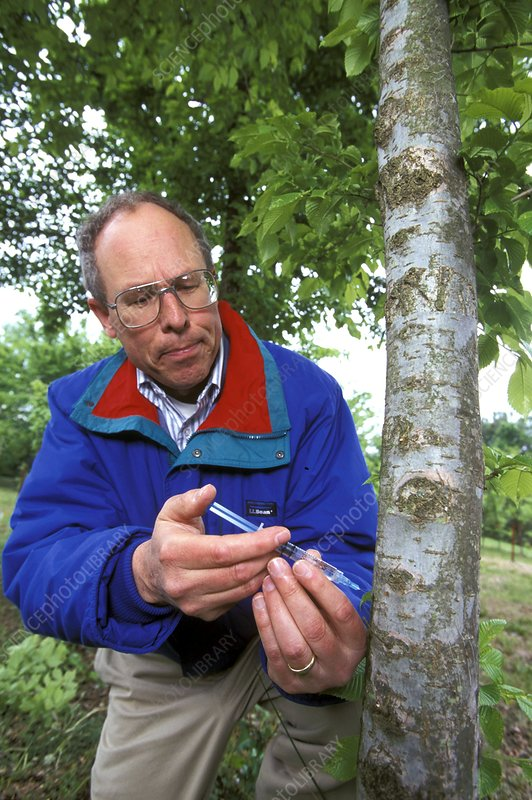 Dutch elm disease research