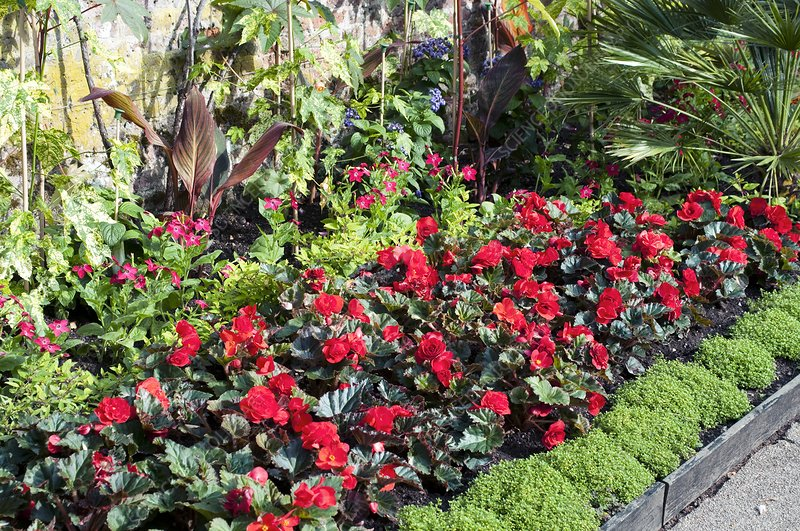 Mixed flowerbed with Begonias