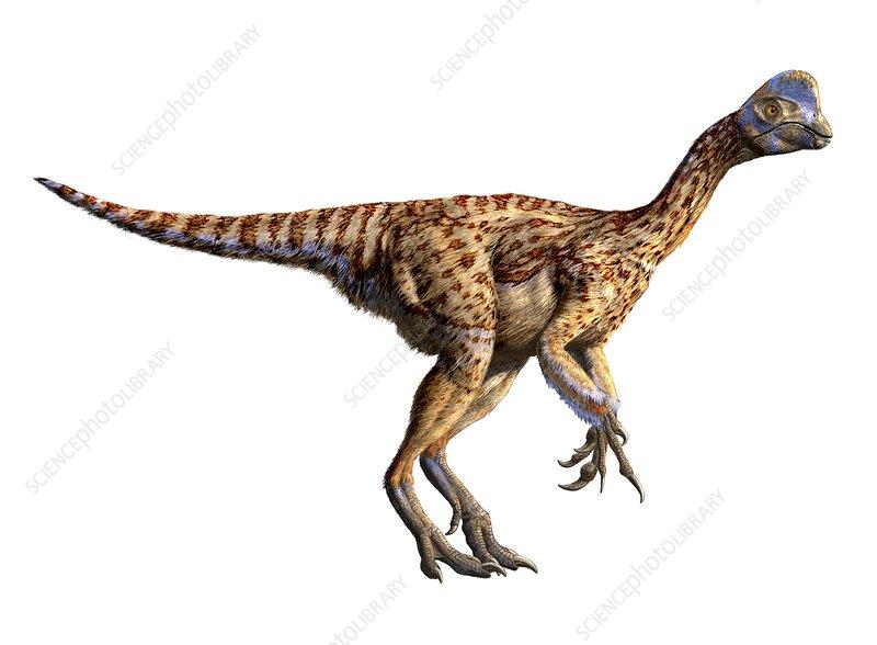 Oviraptor philoceratops dinosaur