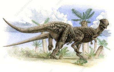 http://www.sciencephoto.com/image/139941/350wm/C0076985-Pachycephalosaurus_wyomingensis_dinosaurs-SPL.jpg