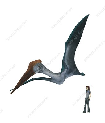Pterosaur, flying next to human, artwork