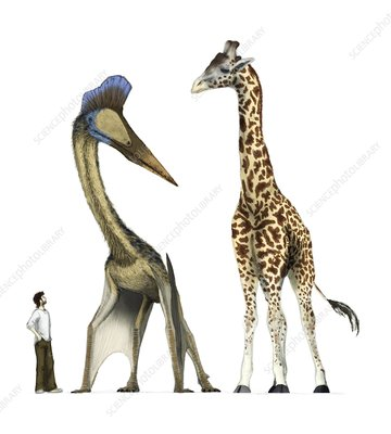 Pterosaur with human and giraffe, artwork