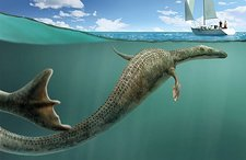 Sea serpent, Cadborosaurus willsi,