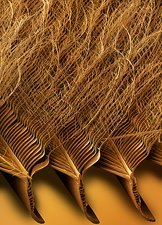 Tawny owl feather detail, SEM