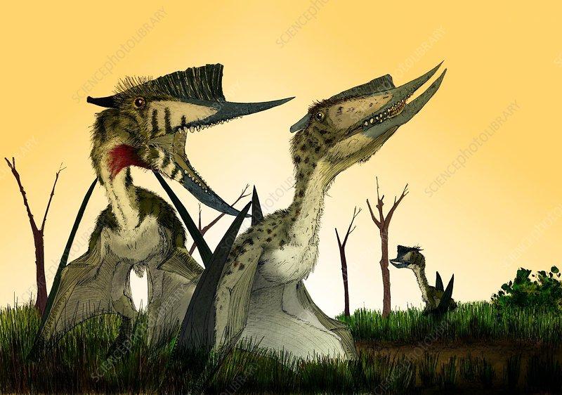 Pterosaurs, Dsungaripterus, artwork