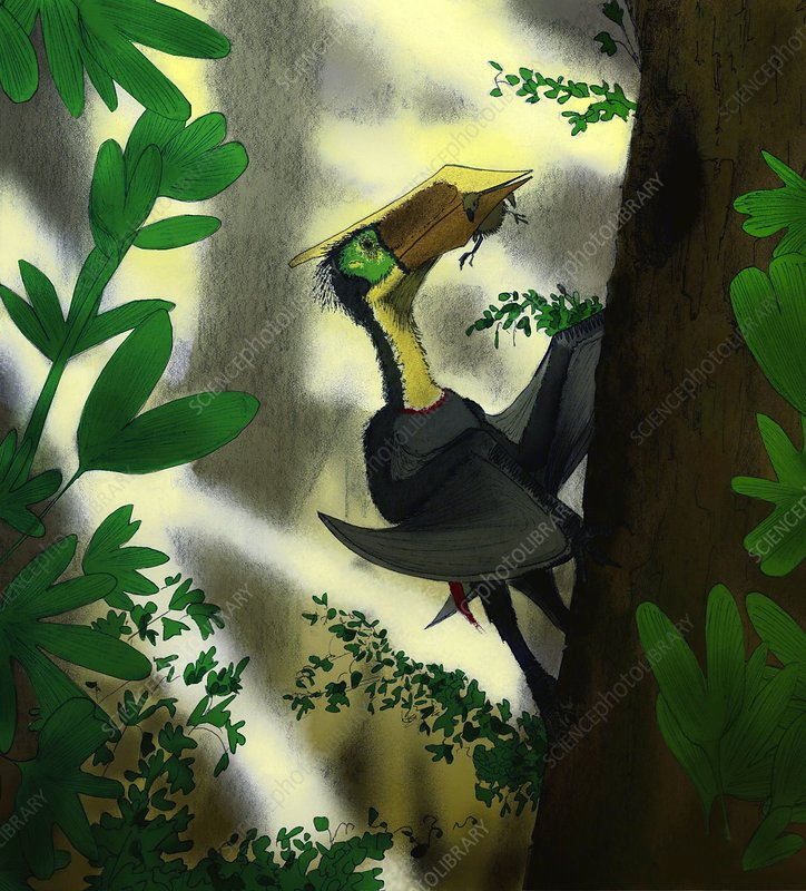Pterosaur, Sinopterus, artwork