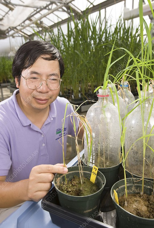 Plant fungus resistance research