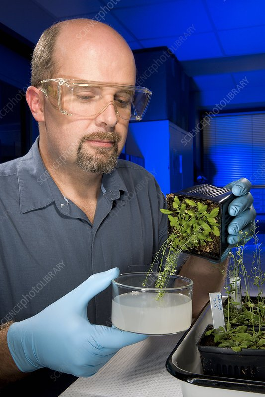 Genetically engineered plant research