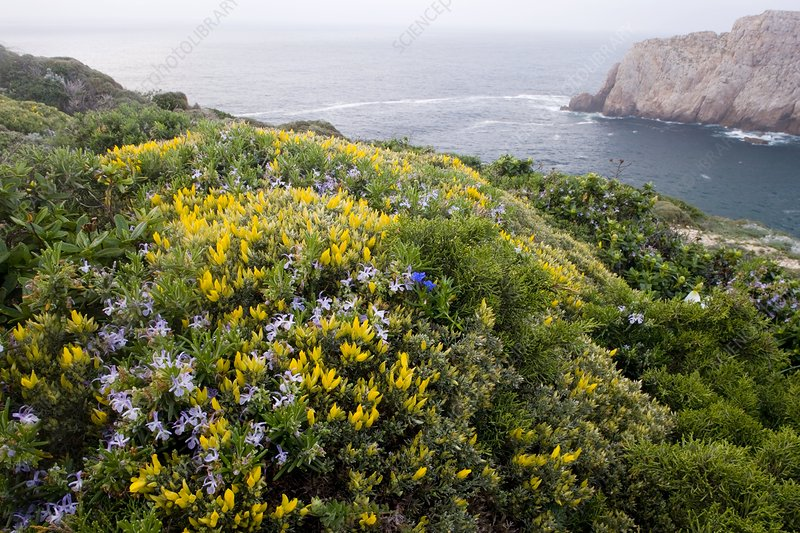 Spring wildflowers, Portugal