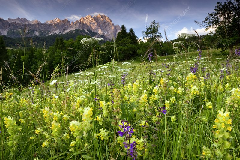 Montane hay meadow, Italy