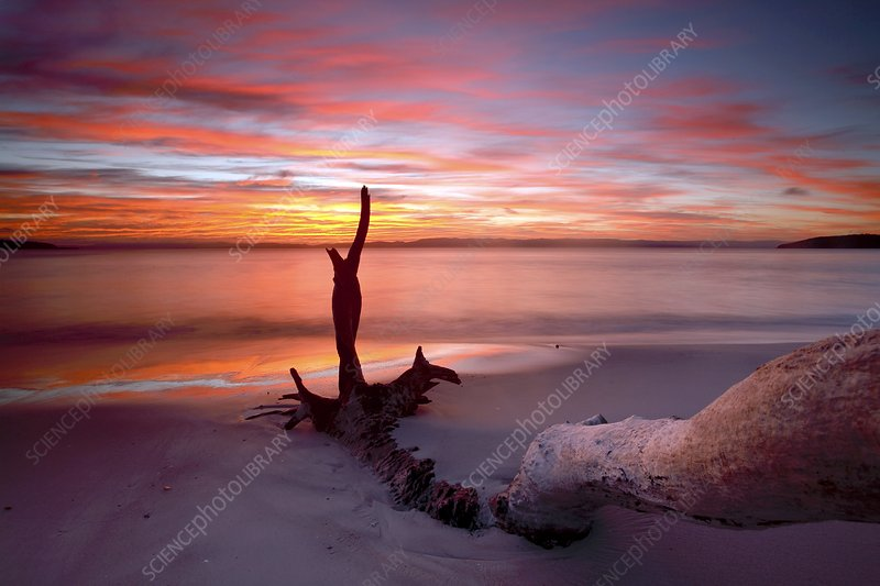 Beach driftwood at sunset