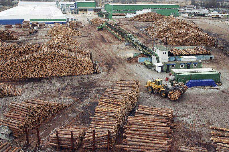 View of a timber yard