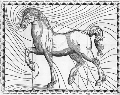 Diagram of the well-proportioned horse