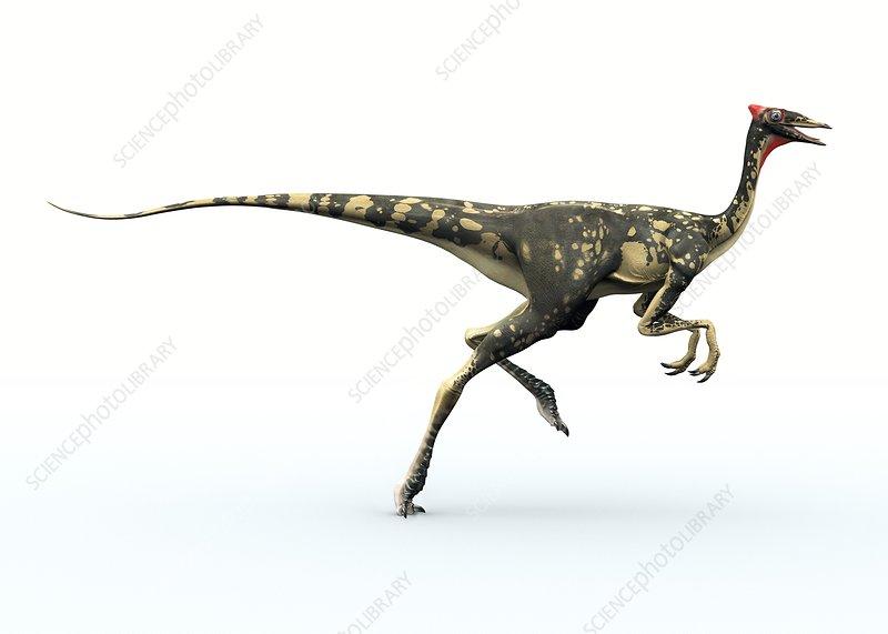 Pelecanimimus dinosaur