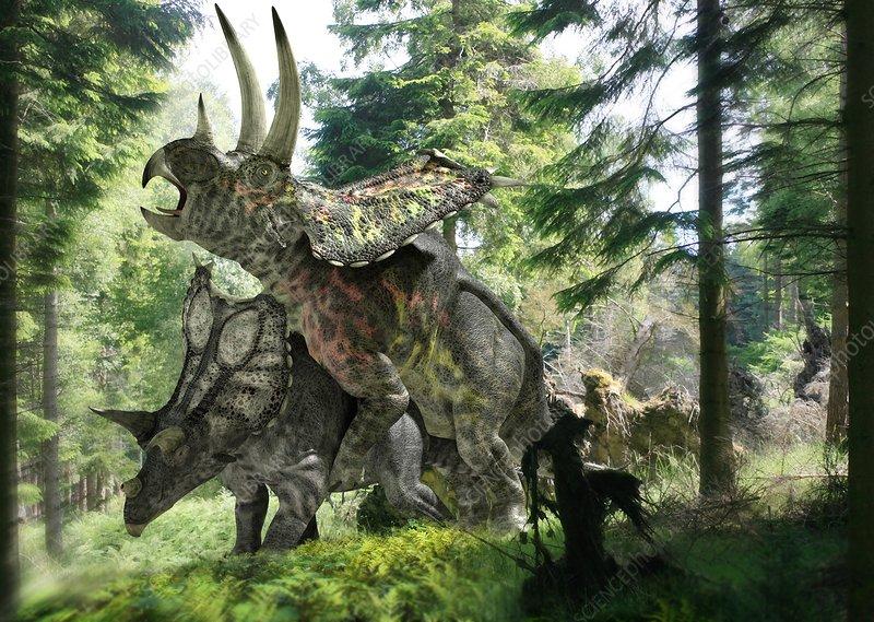 Pentaceratops dinosaurs mating