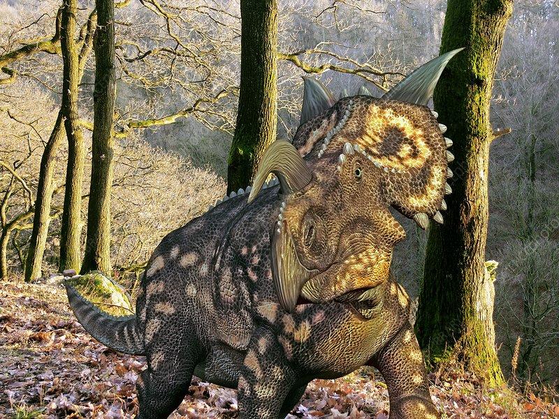 Einiosaurus dinosaur, artwork