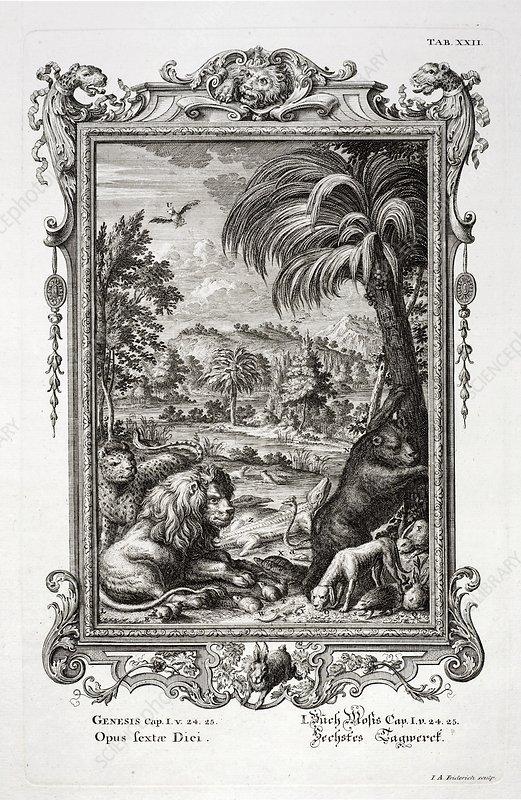 1731 Johann Scheuchzer Creation 6th day