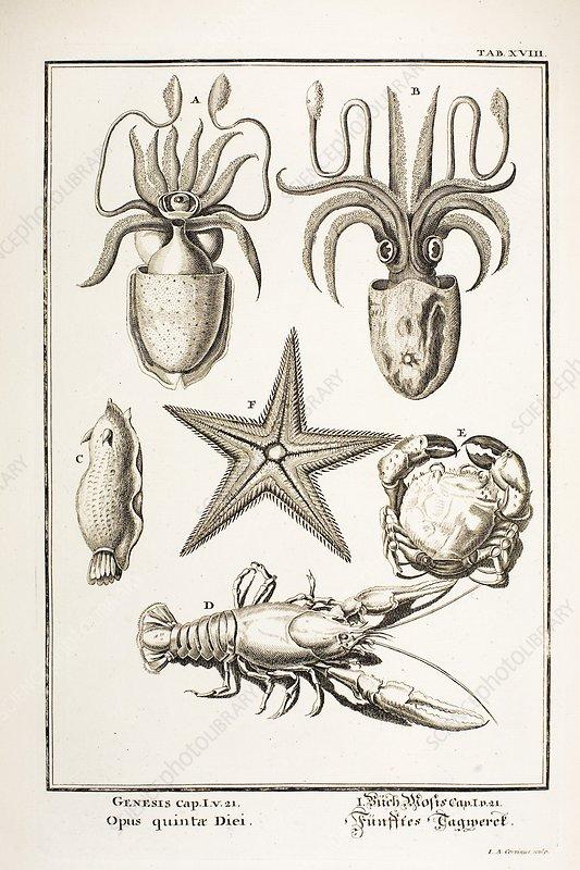 1731 in science