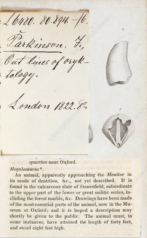 1822 First description of dinosaur