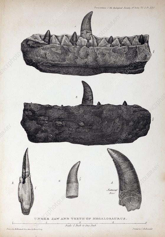 1824 Buckland's Megalosaurus jaw teeth