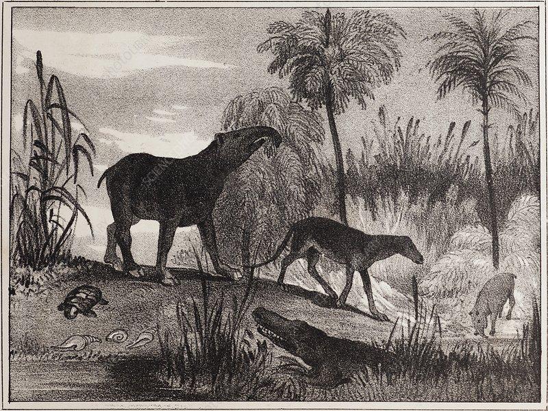 1837 Extinct prehistoric animals Paris
