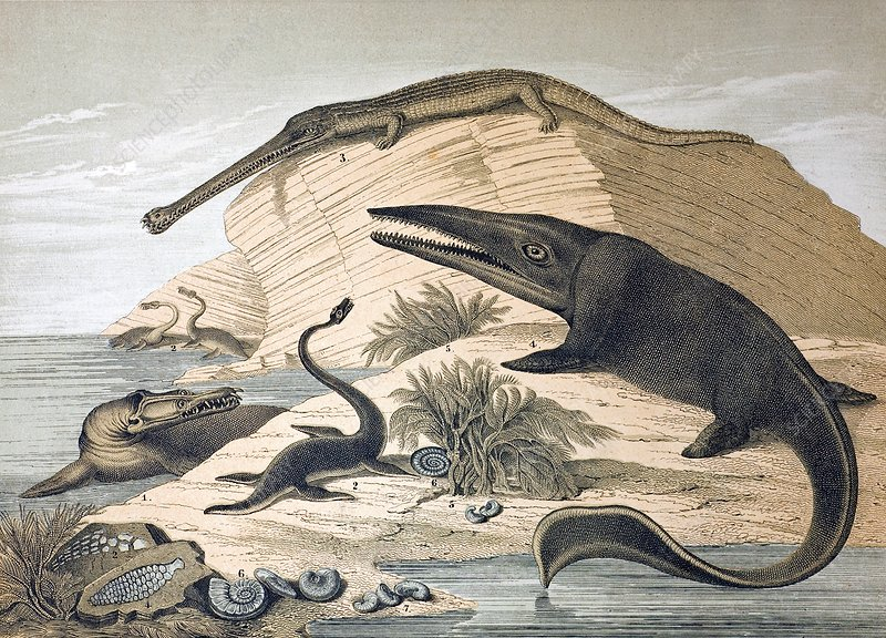 1862 British prehistoric marine reptiles