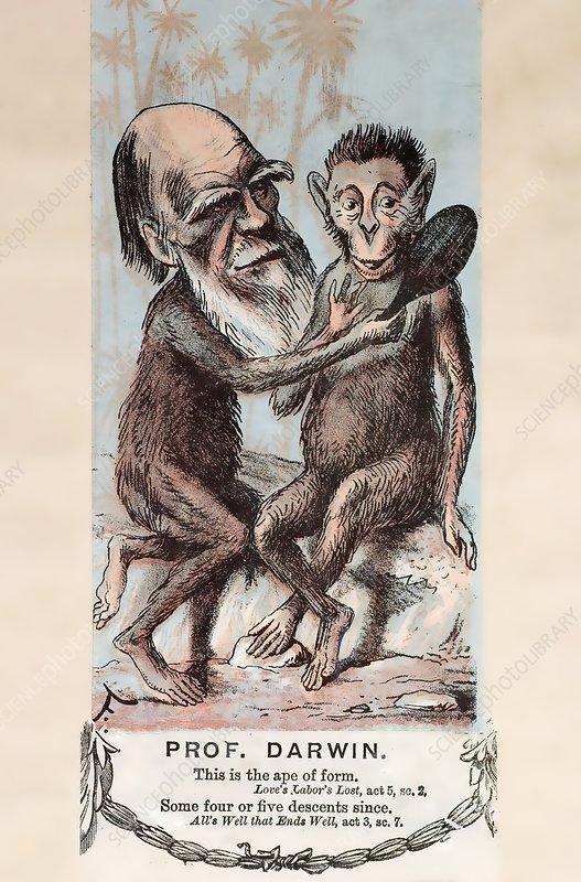 1874 Monkey Darwin cartoon by Faustin