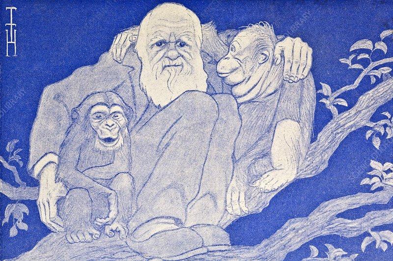 1909 Cartoon Darwin with Apes detail