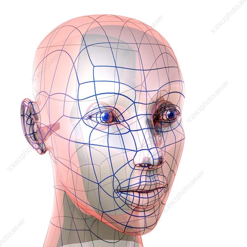Female head, artwork