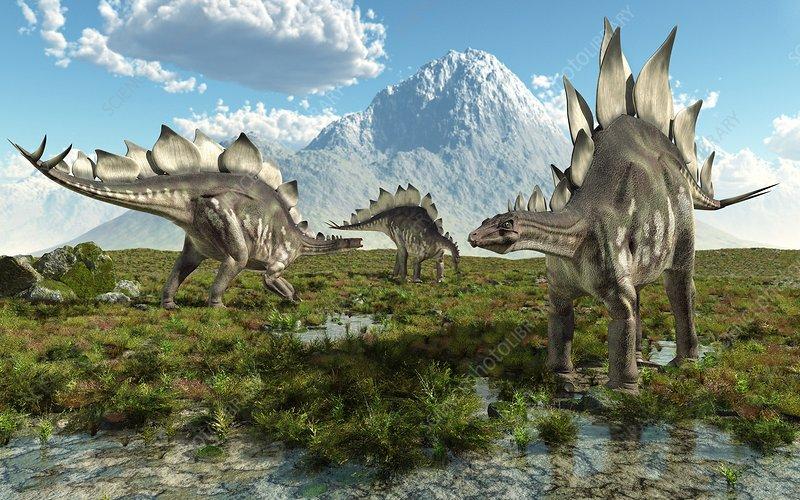 Stegosaurus Dinosaurs Artwork Stock Image C008 8528