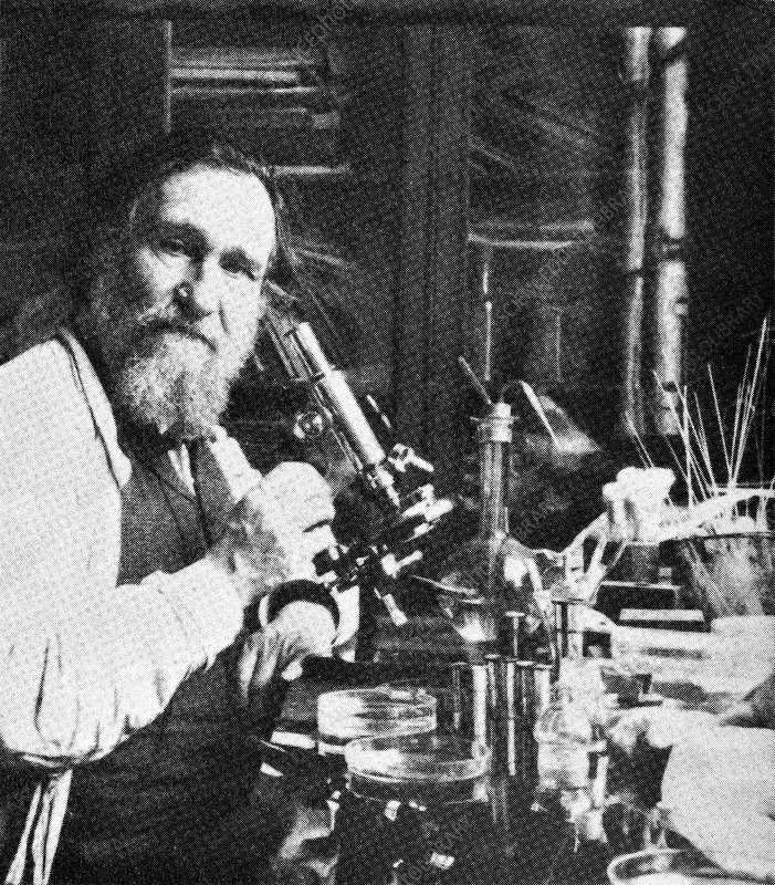 Elie metchnikoff, russian biologist