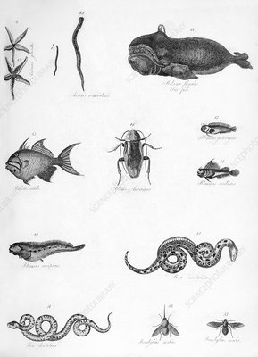 Various animals illustrated, 19th century