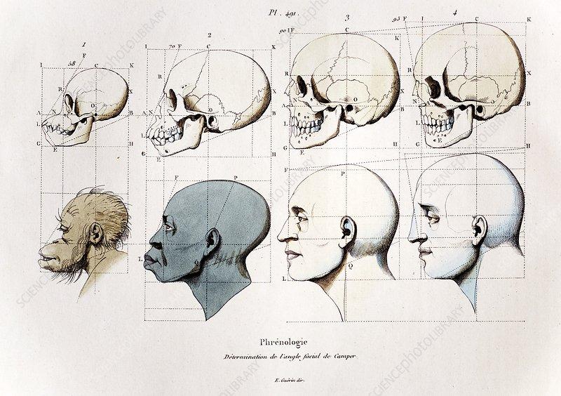 1760a Petrus Camper facial angle eugenics