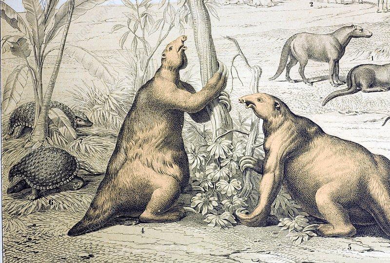 1862 Giant Ground Sloth Megatherium