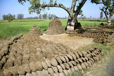 Cow manure drying in the sun, India