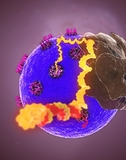 mRNA leaving the nucleus, artwork
