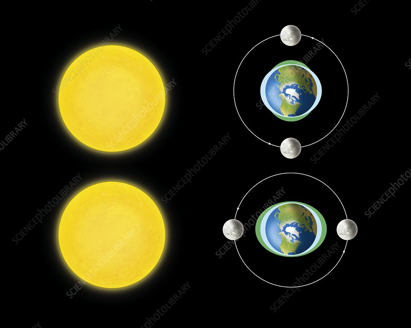 800wm neap and spring tides, diagram stock image c008 9850 science