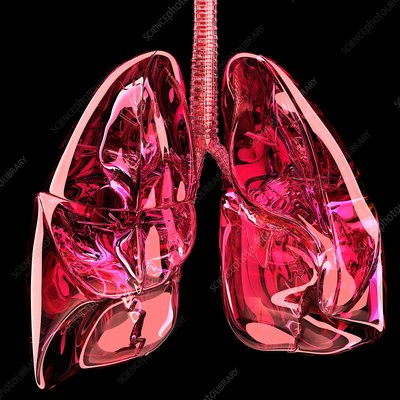 Lungs, artwork