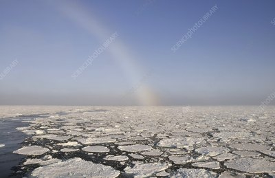 Snowbow over pack ice