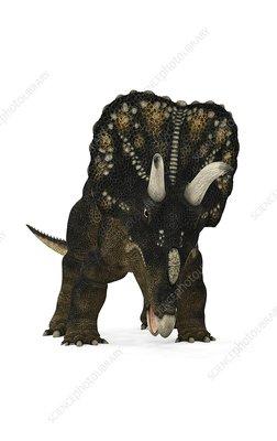 Nedoceratops dinosaur