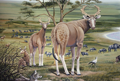 Extinct Giraffes and Giant Wildebeest