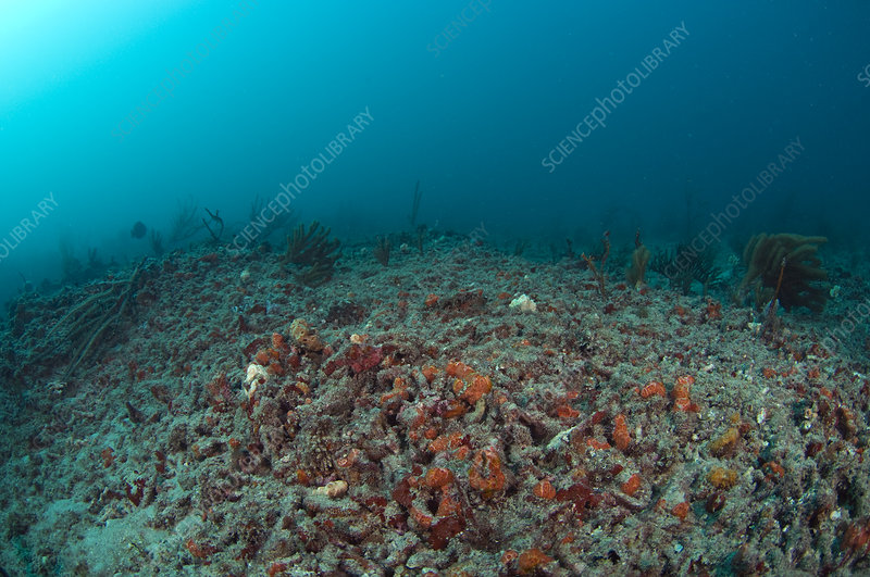 Recovering Coral Reef
