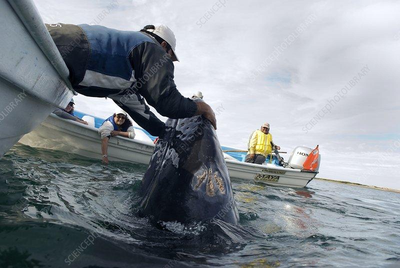 Whale tourism