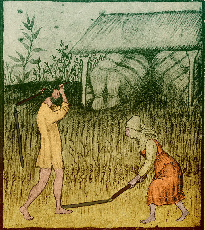 Agriculture-1400s