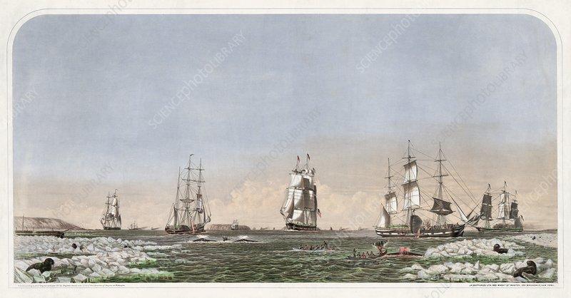 ships at sea. Whaling ships at sea,