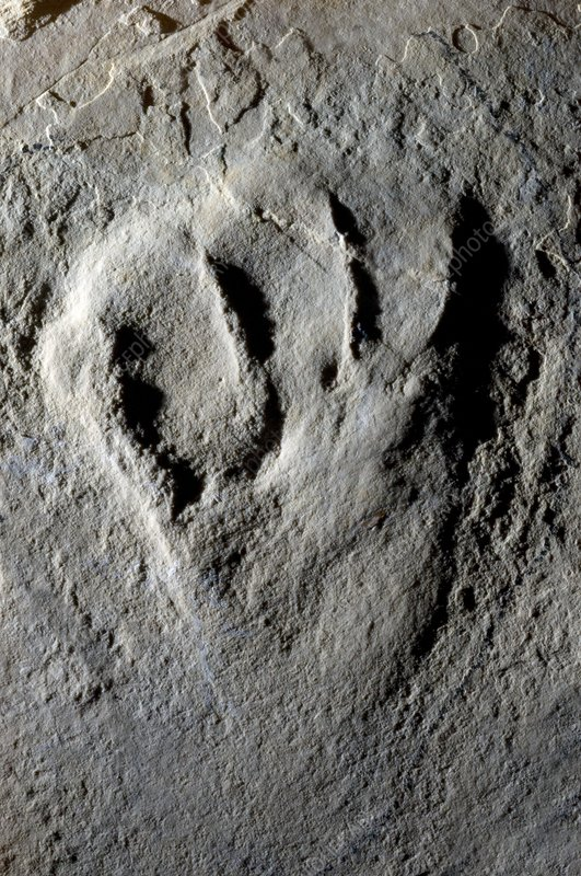 Fossilised pterosaur footprint