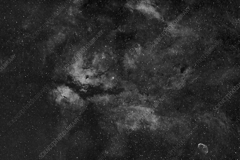 IC 1318 and the Sadr Region